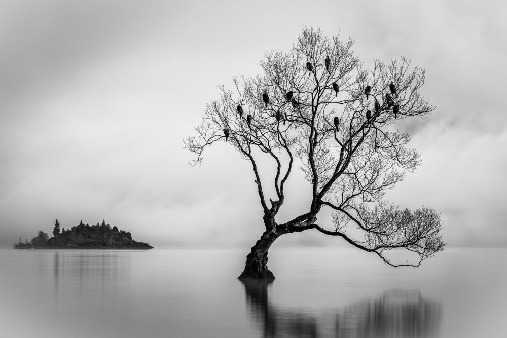 Award winning photo of the Wanaka Tree by Michelle McKoy