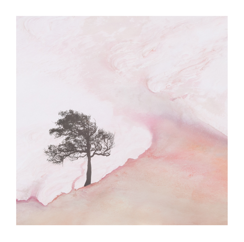 Composite Tree and Pink lake aerial